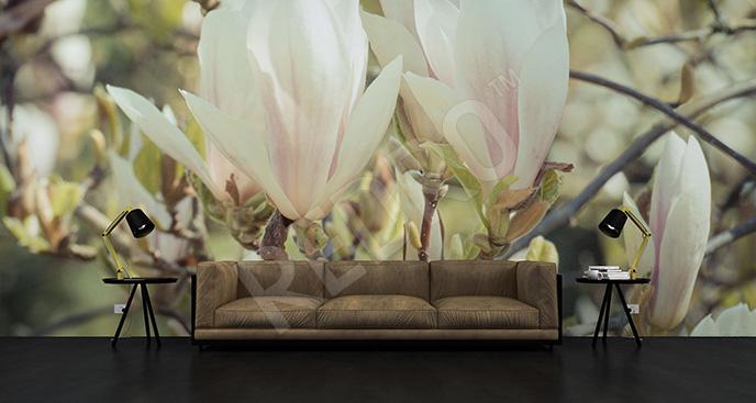 Fototapeta magnolia w słońcu