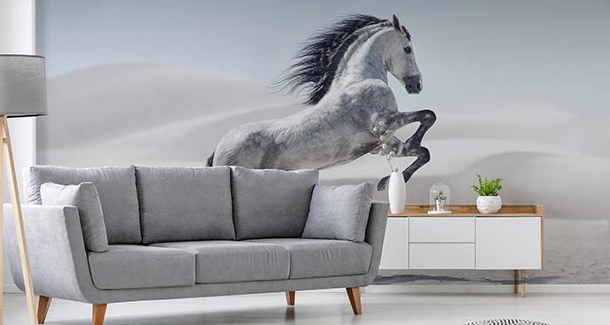 Fototapeta koń andaluzyjski