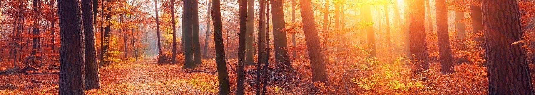 Fototapeta park jesienią