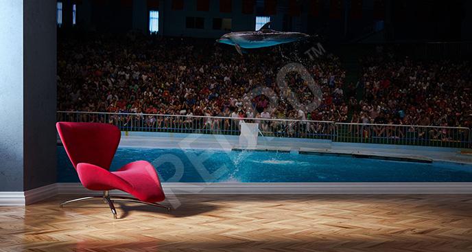 Fototapeta pokaz delfinów