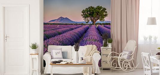 Fototapety z lawendą - harmonia na ścianach