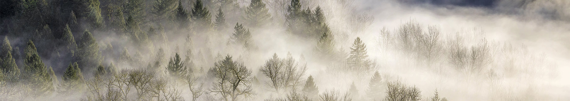 Fototapeta poranna mgła