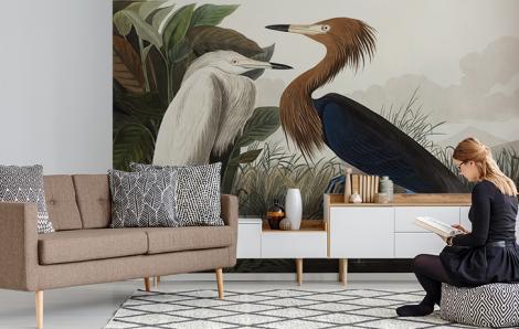 Fototapeta ptaki czapla purpurowa