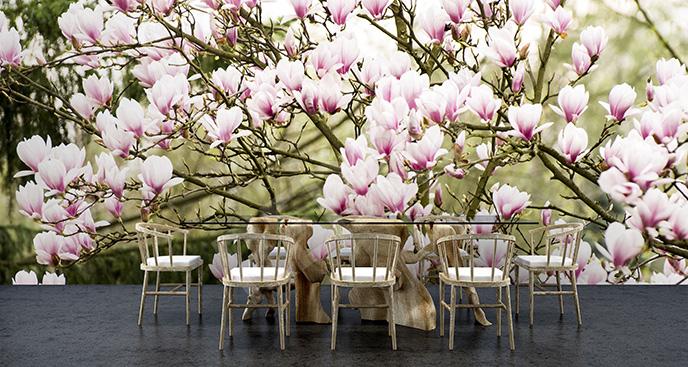 Fototapeta różowe magnolie 3D