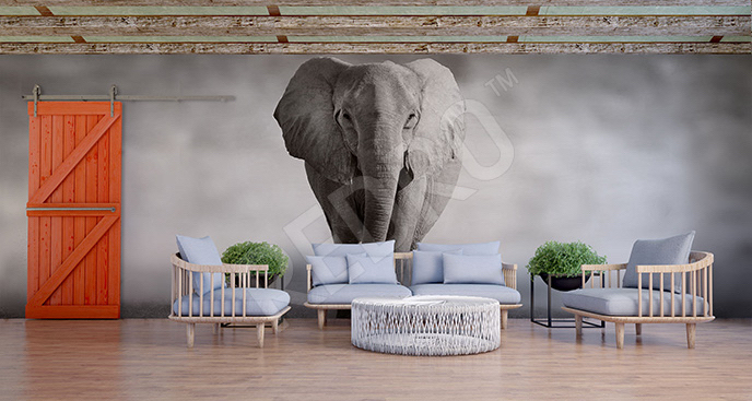 Fototapeta słoń 3D