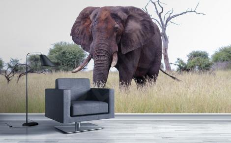 Fototapeta słoń afrykański do salonu