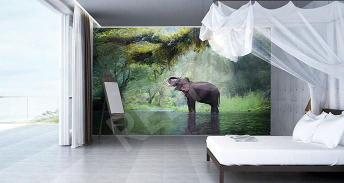 Fototapeta słoń w dżungli