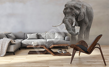 Fototapeta słoń w szarościach