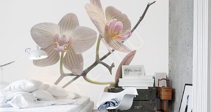 Fototapeta storczyk do sypialni