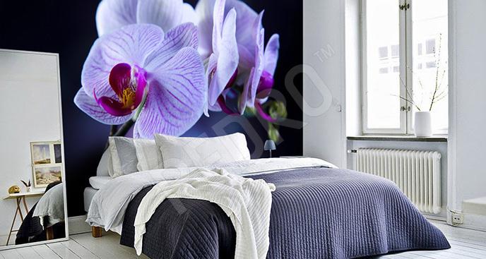 Fototapeta storczyki fioletowe
