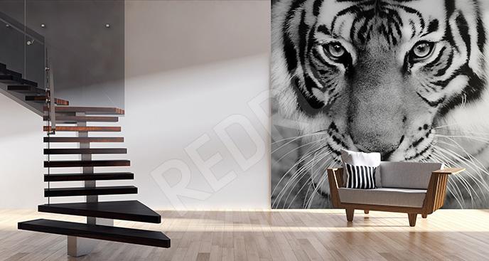 Fototapeta tygrys czarno-biały