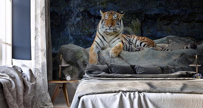 Fototapeta tygrys na skałach