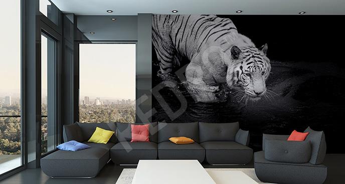 Fototapeta tygrys w wodzie