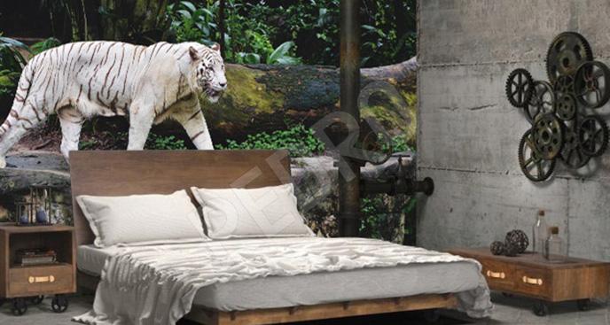 Fototapeta tygrys w zoo