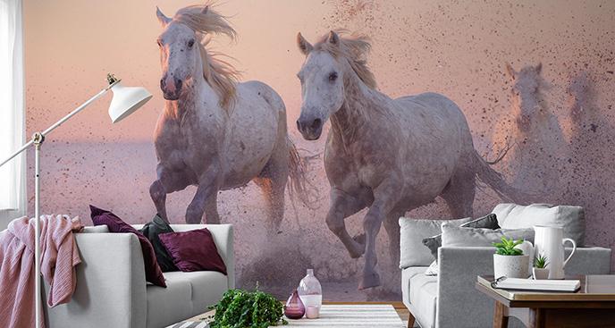 Fototapeta dzikie konie w galopie