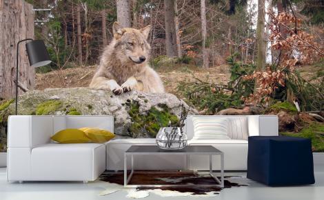 Fototapeta wilk w lesie