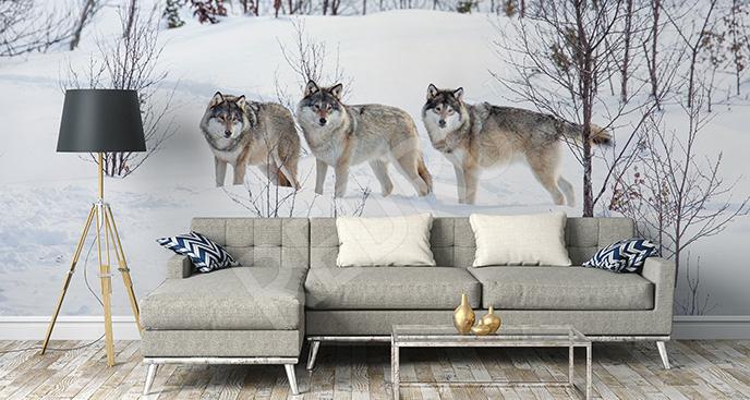 Fototapeta wilki w śniegu
