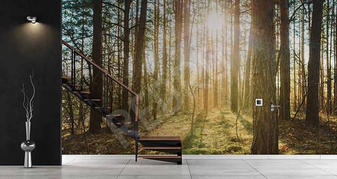 Fototapeta wiosna w lesie