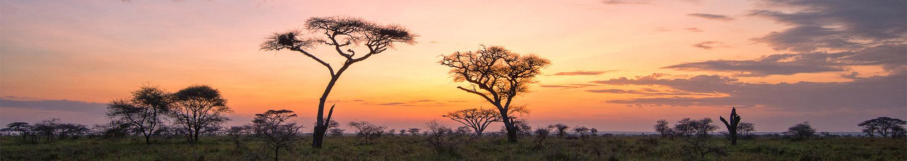 Fototapeta wschód słońca nad sawanną