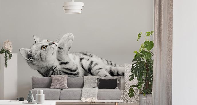 Fototapeta koty do pokoju dziecka