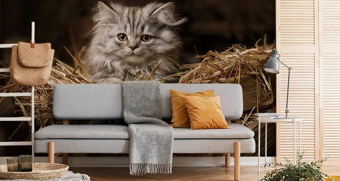 Fototapeta z małym kotkiem