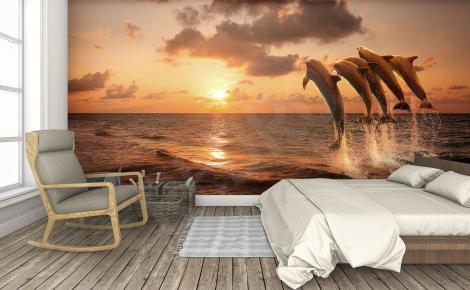 Fototapeta zachód słońca delfiny