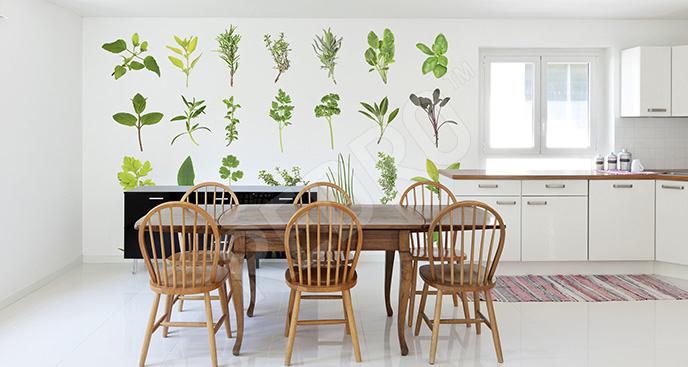 Fototapeta zioła zielone