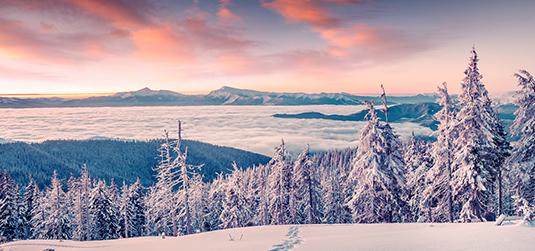 Górskie lasy