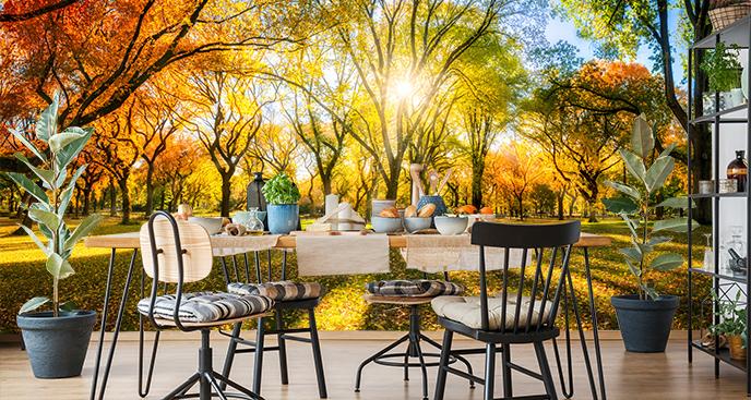 Jesienna fototapeta park
