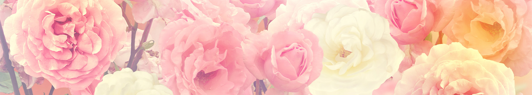 Kolorowa fototapeta róże
