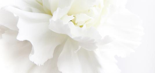 Kwiaty białe