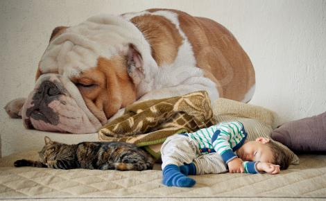 Naklejka śpiący pies