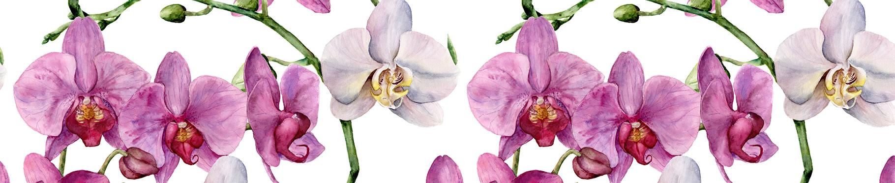 Naklejka storczyki białe i fioletowe