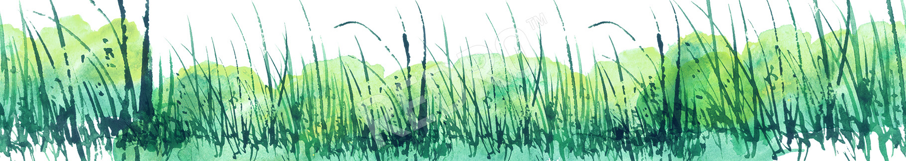 Naklejka trawa akwarela