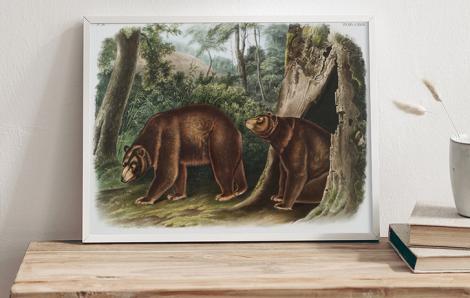 Niedźwiedzie cynamonowe w lesie