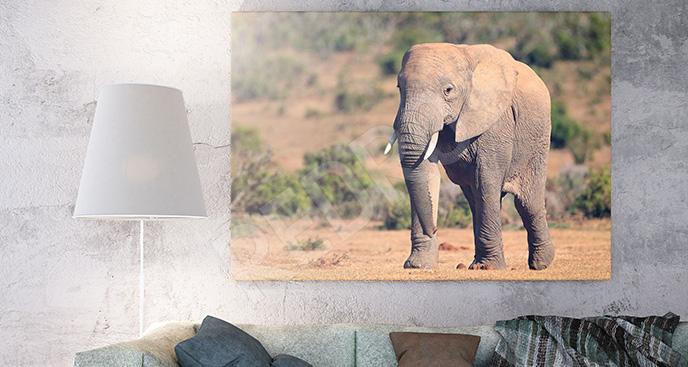 Obraz afrykańskie zwierzę