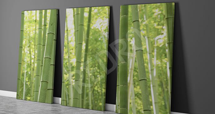 Obraz bambusowy las