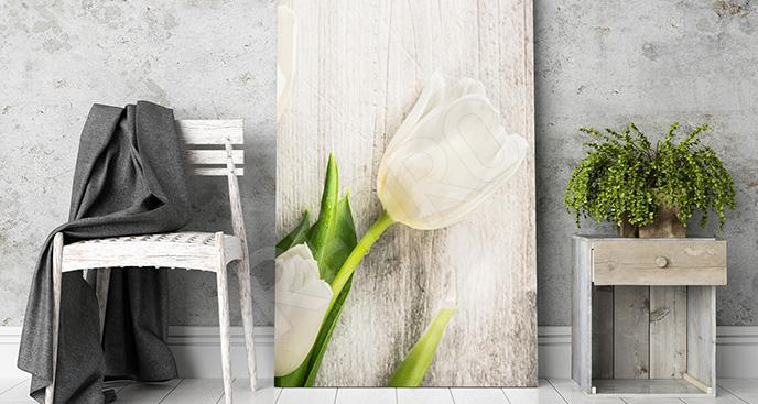Obraz biały tulipan do salonu
