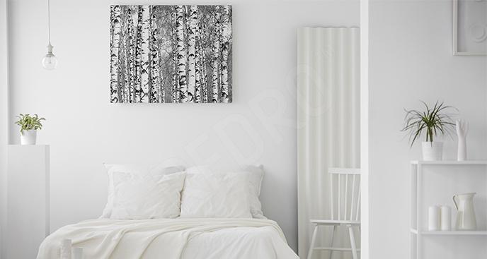 Obraz brzozy czarno-białe