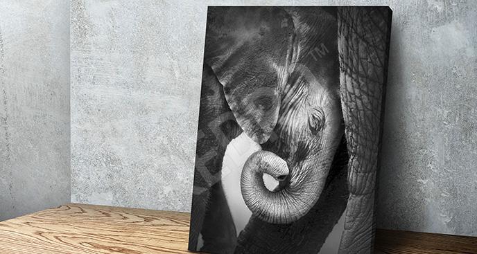 Obraz czarno-biały: słoniątko