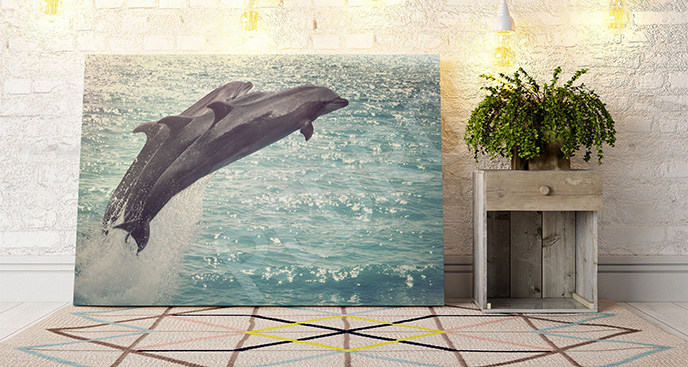 Obraz delfiny w słońcu