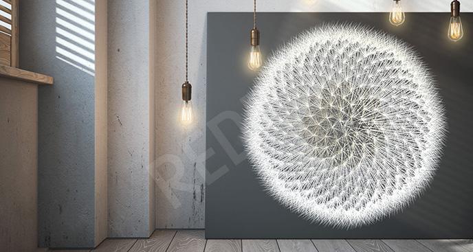 Obraz dmuchawiec czarno-biały
