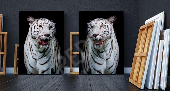Obraz dyptyk białe tygrysy