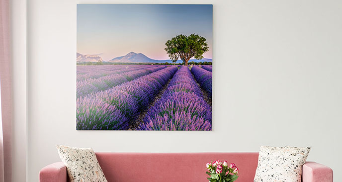Obraz fioletowe pole