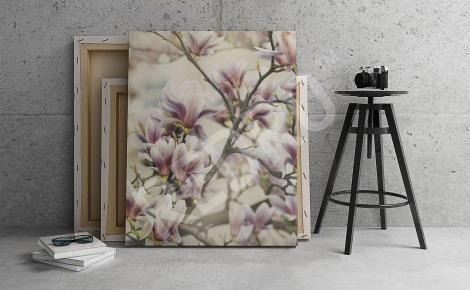 Obraz gałązki magnolii