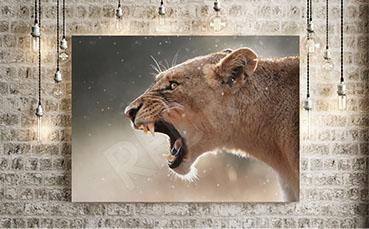 Obraz głowa lwa