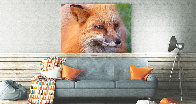 Obraz głowa rudego lisa