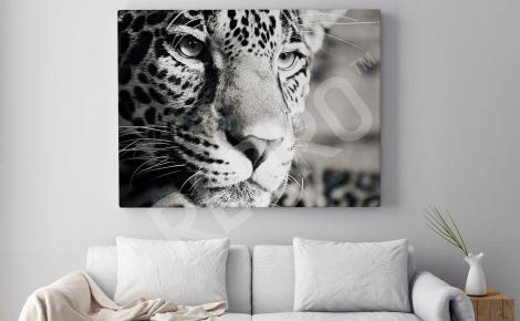 Obraz jaguar do salonu