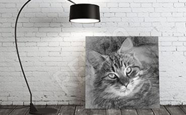 Obraz kot skala szarości