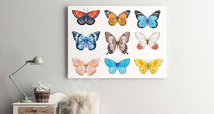 Obraz kolorowe motylki